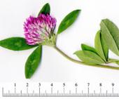 デジタル押し花